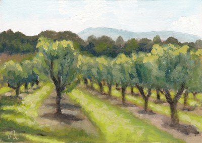Cherry Orchard Provence